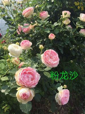 云南省昆明市呈贡区欧月