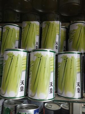 江苏省宿迁市沭阳县黄心芹菜种子