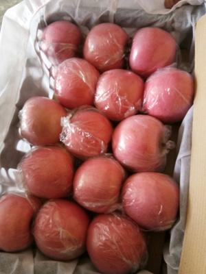 山西省运城市临猗县红富士苹果 纸+膜袋 片红 80mm以上
