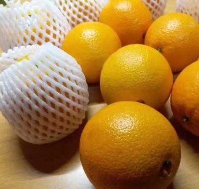这是一张关于爱媛38号柑桔 5.5 - 6cm 3两以上的产品图片