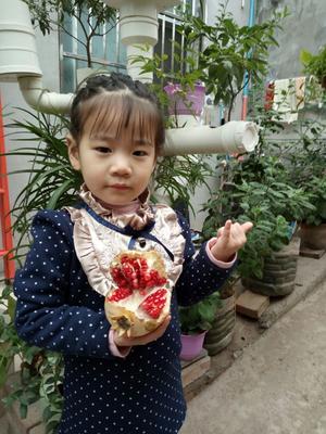 陕西省西安市临潼区临潼石榴 0.6 - 0.8斤