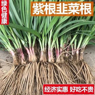 湖北省武汉市新洲区韭菜根
