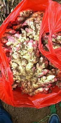 这是一张关于黄姜 带土 3两以上的产品图片