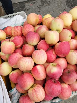 四川省阿坝藏族羌族自治州茂县红富士苹果 纸+膜袋 条红 80mm以上