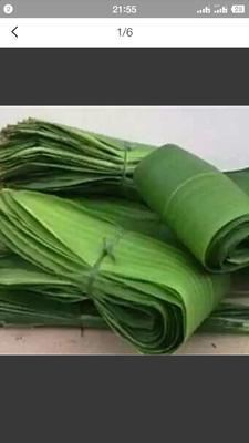 这是一张关于粽子叶的产品图片