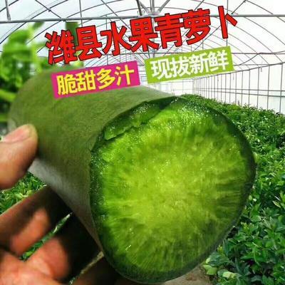 山东省潍坊市寒亭区水果萝卜 1~1.5斤