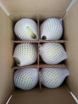 这是一张关于青苹果 膜袋 翠绿 75mm以上的产品图片
