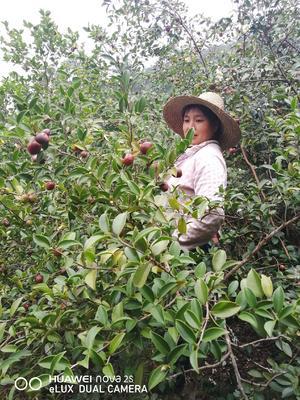 广西壮族自治区百色市隆林各族自治县油茶籽