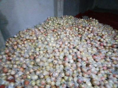 云南省红河哈尼族彝族自治州河口瑶族自治县蒙自石榴 0.3 - 0.5斤
