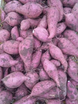 广东省清远市英德市红心红薯 红皮 3两~6两