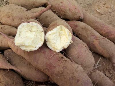 这是一张关于济薯26号红薯 红皮 混装通货的产品图片