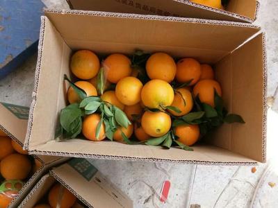 这是一张关于赣南脐橙 80-85mm 4-8两的产品图片