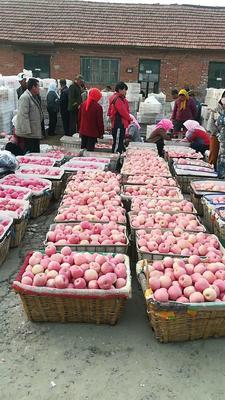 山东省临沂市沂水县红富士苹果 纸袋 条红 75mm以上