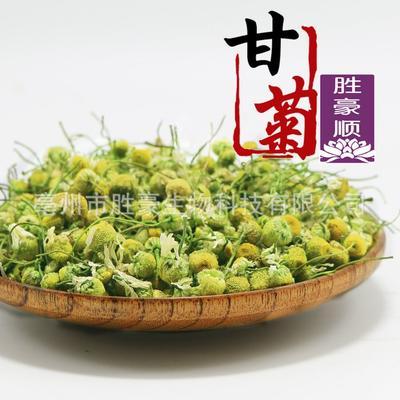 这是一张关于洋甘菊 散装 特级的产品图片