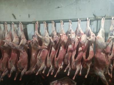 河南省安阳市滑县羊肉类 生肉