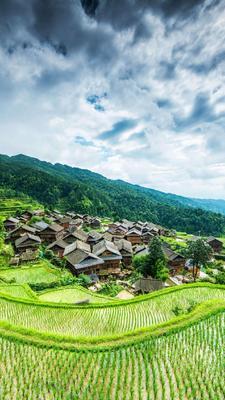 这是一张关于 稻花香大米 绿色食品 晚稻 一等品的产品图片