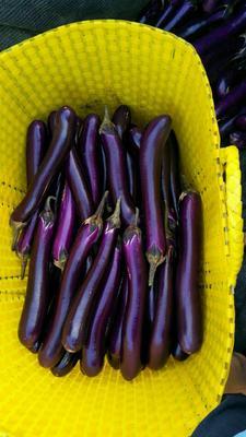 广西壮族自治区南宁市隆安县紫长茄 4两以上