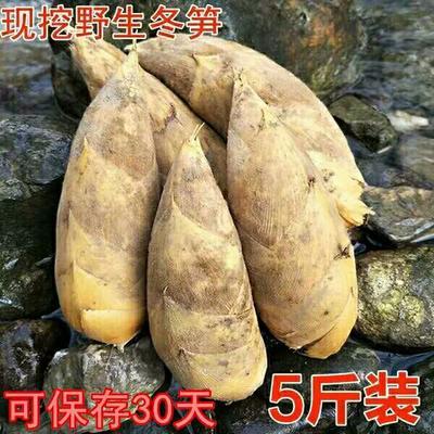 湖南省衡阳市衡阳县冬笋 13~17cm 鲜笋