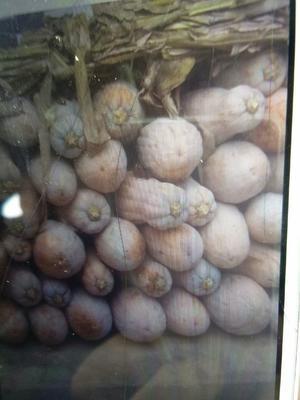 四川省雅安市汉源县羊角蜜甜瓜 2斤以上