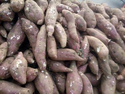 湖南省永州市新田县苏薯八号红薯 红皮 6两~1斤