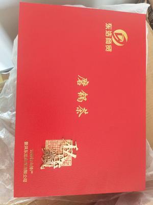 云南省西双版纳傣族自治州景洪市云南绿茶 礼盒装 特级
