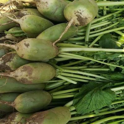 这是一张关于青皮萝卜 0.2~1斤的产品图片