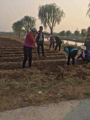 山东省菏泽市牡丹区观赏牡丹 20cm以上 20cm以上 0.5米以下