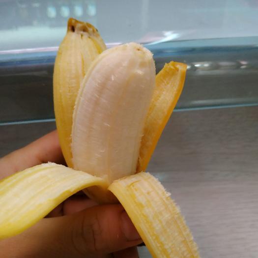 小米蕉 广西 小果实惠装 9斤包邮 现摘新鲜发货