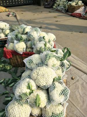 山东省滨州市滨城区有机花菜 松散 2~3斤 乳白色