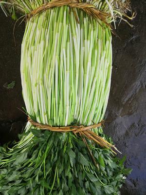 广东省湛江市雷州市尖叶水芹 60cm以上