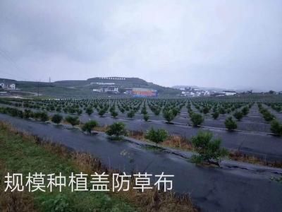 安徽省安庆市怀宁县防草布
