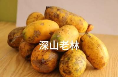 江西省赣州市石城县黄九月瓜 野生 150g以上
