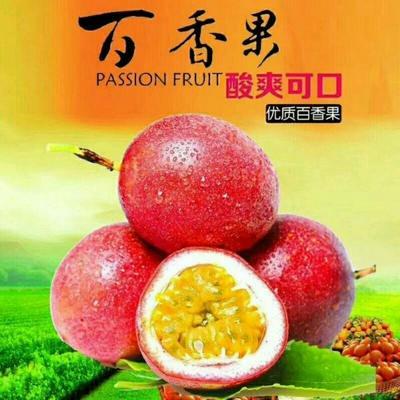 广西壮族自治区玉林市兴业县紫红色百香果 80 - 90克