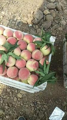 山东省潍坊市青州市映霜红蜜桃 70mm以上 4两以上