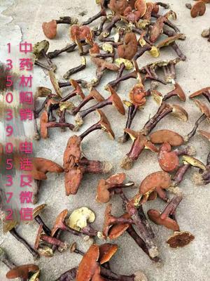 这是一张关于山茱萸的产品图片