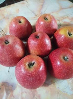 这是一张关于秦冠苹果 光果 全红 75mm以上的产品图片