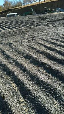 内蒙古自治区赤峰市翁牛特旗363葵花籽