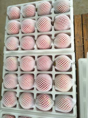 这是一张关于河阴石榴 0.8 - 1斤的产品图片