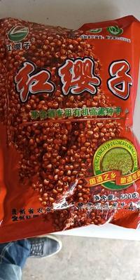 贵州省遵义市仁怀市红樱子高粱种子 种子