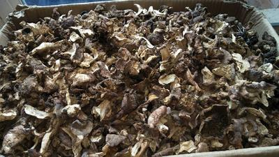 河北省承德市围场满族蒙古族自治县干红蘑菇 箱装 1年以上