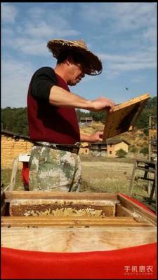 这是一张关于中蜂的产品图片
