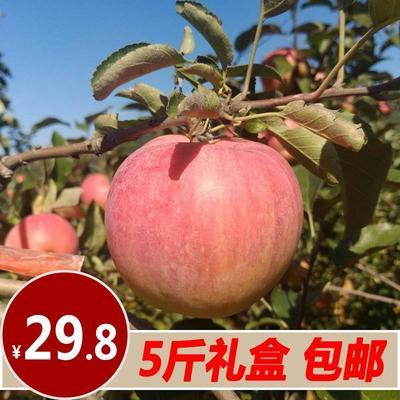 这是一张关于寒富苹果 光果 条红 90mm以上的产品图片