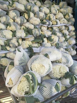 河南省开封市通许县白花菜花 紧密 1~2斤 乳白色
