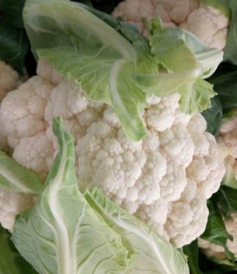 湖北省湖北省天门市白花菜花 紧密 2~3斤 乳白色