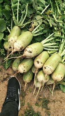 河南省焦作市博爱县有机花菜 松散 2~3斤 乳白色
