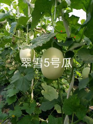 浙江省嘉兴市桐乡市甜宝 2斤以上