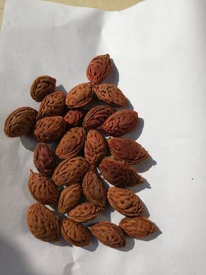 这是一张关于桃树种子的产品图片