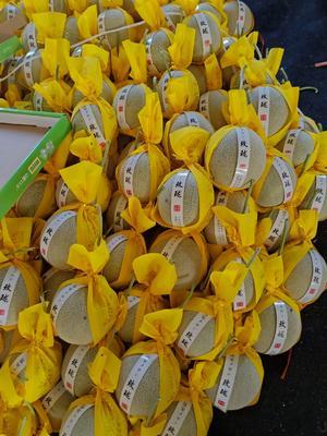 山东省潍坊市寿光市网纹蜜瓜 2斤以上