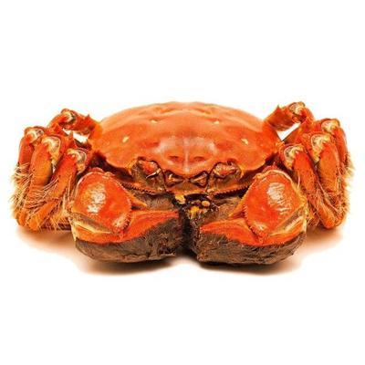 这是一张关于阳澄湖大闸蟹 4.0两以上 公蟹的产品图片