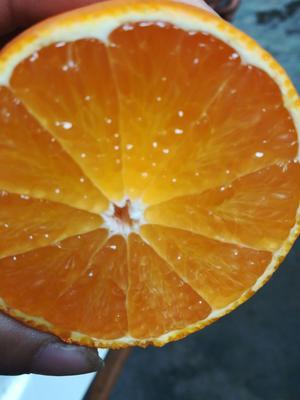 这是一张关于爱媛38号柑桔 6.5 - 7cm 3两以上的产品图片